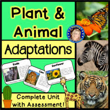 Plant And Animals Adaptations Venn Diagram Plant And Animal Adaptations By Teaching East Of The Middle Tpt