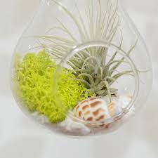 Air Plant Terrarium Hanging Lightbulb Air Plant Terrarium By Dingading Terrariums
