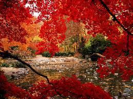 Nature, Autumn, Red wallpaper
