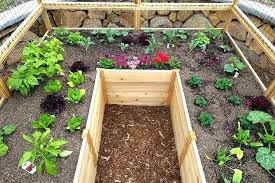elevated garden bed kits raised cedar deer proof complete kit 8 x for slopes costco