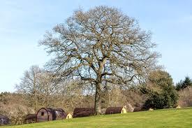 Whitemead Forest Park, <b>Lydney</b> - Новые цены на 2020 год - Pitchup®