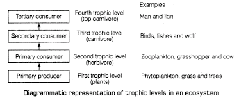 Important Questions For Cbse Class 12 Biology Energy Flow