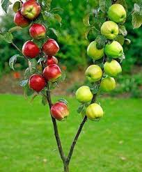 Get Tired Of Just Single-variety Fruit Tree In Your Yard? Here Is ...