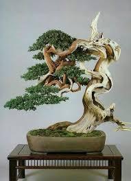 <b>Bonsai</b> Trees For Inspiration Your <b>Home Decor</b> | Деревья <b>бонсай</b> ...