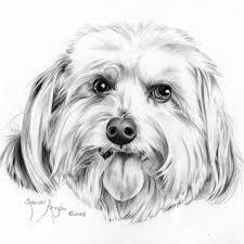 dog drawing.  Dog ShaggyDogdrawingbySandraAngelo U201c Inside Dog Drawing C