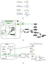 mitochondrial glycine cleae system