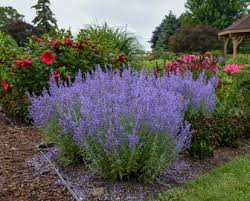 low maintenance plants for landscaping