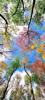 294510 Nature, Tree, Branch, Natural ...