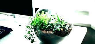 best indoor office plants. Office Plants No Windows Best Indoor Good Astonishing Desk South Africa .  That Can Improve Your E