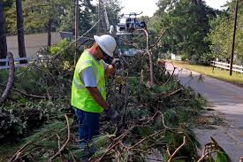 larry taylor of laclede electric cooperative helps clear pine tree debris to make way for new