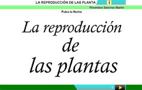 http://www.clarionweb.es/5_curso/c_medio/cm506/cm50601.htm