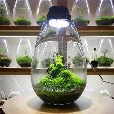 Terrarium Light Mosslights Innovative Indoor Led Moss Terrariums That