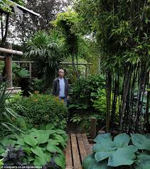 Small Picture Man creates exotic paradise garden with banana plants and palm