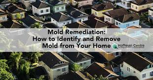 mold reation remove mold from