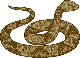 rattlesnake clipart. Contemporary Rattlesnake Rattlesnake Clipart Ular Python Free Brown Ungu Image Black And White  Library Throughout Clipart L