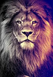 Online Shop for lion craft stitches Wholesale with Best Price