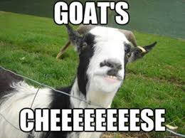 Goat Quotes Enchanting 48 Goat Quotes For Every Occasion Goat Crazy Pinterest Goats