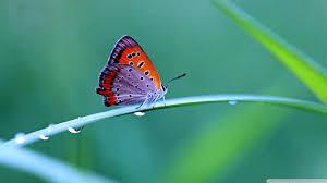 desktop wallpaper butterfly. Delighful Desktop Smartphone  Intended Desktop Wallpaper Butterfly