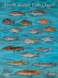 Florida Freshwater Fishing Regulations Chart Types Of Fish To Stock In Florida Ponds Fish Chart Fish