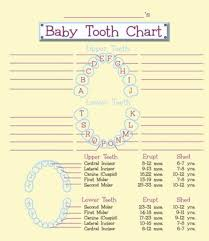 Children S Tooth Chart Letters 38 Printable Baby Teeth Charts Timelines Template Lab