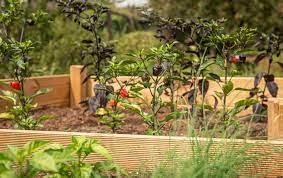 ants in raised garden bed reasons