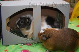 diy guinea pig toy shoebox and hay