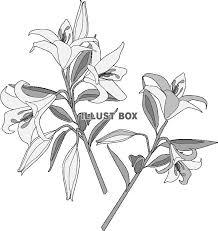 無料イラスト 百合の花グレー