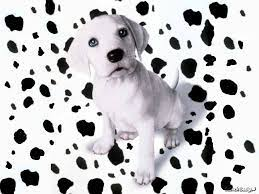 40+] Dalmatian Spots Wallpaper on ...
