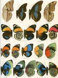 Butterfly Patterns Printable Amazing Decorating Ideas