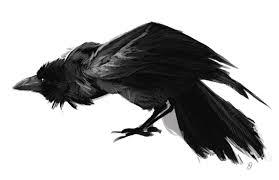 Flying Crow Tattoo Sketch 4 The Honeyfurs Blog