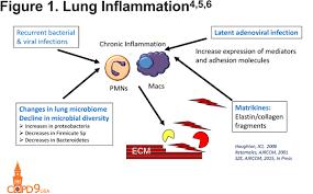 Pathophysiology Of Emphysema Flow Chart Pathophysiology Of Emphysema Journal Of Copd Foundation