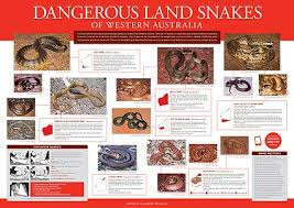 Australian Snake Chart Field Guides Field Guide And Catalogues