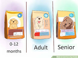 Poodle Feeding Chart 6 Ways To Care For A Toy Poodle Wikihow