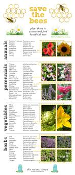Bee Friendly Garden Design Creating A Bee Friendly Garden Plants To Attract And Feed