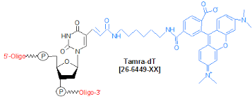 Tamra-dT Oligo Modifications from Gene Link