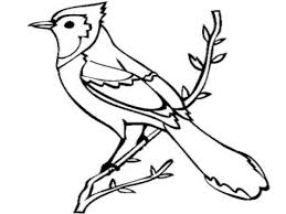 Small Picture Jay Bird Coloring Page Flying Blue Jay Coloring Pages Blue Jay