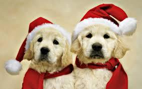 cute animal christmas backgrounds. Simple Animal Ready For Santa  Red Christmas Santa Claus Golden Retriever Animal On Cute Animal Christmas Backgrounds U