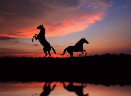 Animals Dog Beach Sunset Wallpapers Hd Desktop Horses