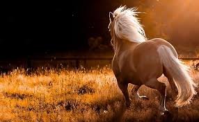 hd wallpapers horse
