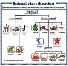 Animal Classification Chart Animal Classification Poster Set