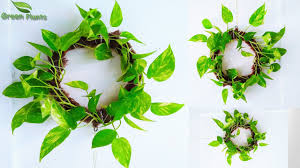 Make a Money <b>plant</b> Wreath Living Wall <b>Wedding</b> Decoration ...