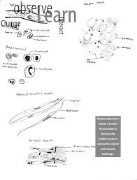 Big Ideas In Biology Chart Answers 6 Science Content Standards National Science Education