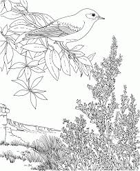 Small Picture Coloring Pages Flower Page Printable Coloring Sheets Bird And