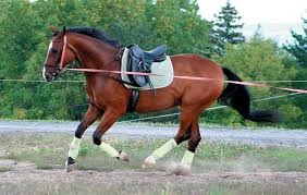 Image result for How To Save Money On Equine Supplements?