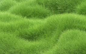 grass texture hd. Modren Texture Grass Texture Hd And Grass Texture Hd