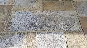 lichen black spots splodges ruining