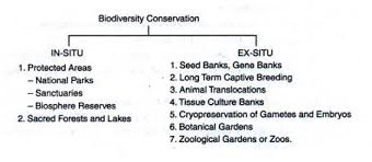conservations of biodiversity in situ conservation and ex situ  types of conservation