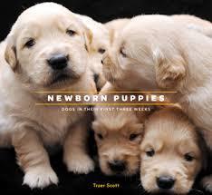 golden retriever newborn puppies. Interesting Retriever Intended Golden Retriever Newborn Puppies