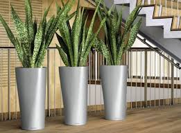 Interior office plants Office Room Plant Concepts First Blog Post Details Coming Soon Pdi Plants Blog Welcome To Our New Website Interior Office Plants Rochester Ny