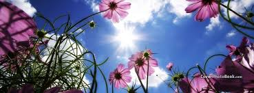 purple flowers in sky spring free facebook timeline profile cover nature